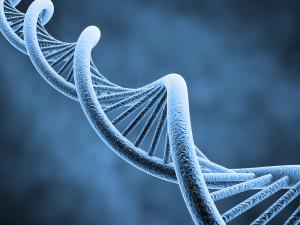 hernia in genetics